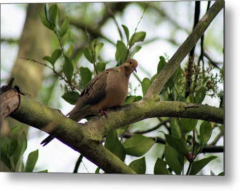 Dove Metal Print featuring the photograph Dove Bar by Ellen Lerner ODonnell