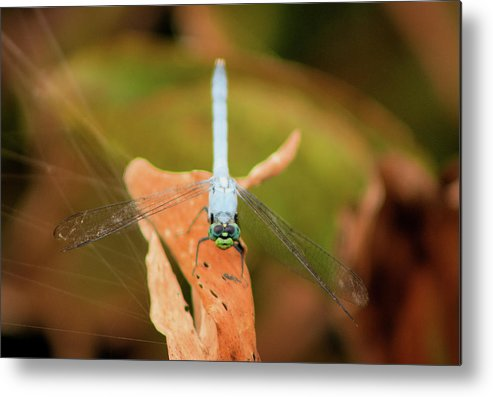 Dragonfly Metal Print featuring the photograph Face Of The Dragon by Karl Ford