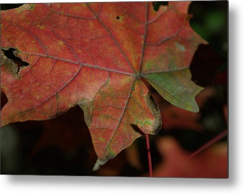 Fall Metal Print featuring the photograph Fall Leaves 1 by Eric Workman