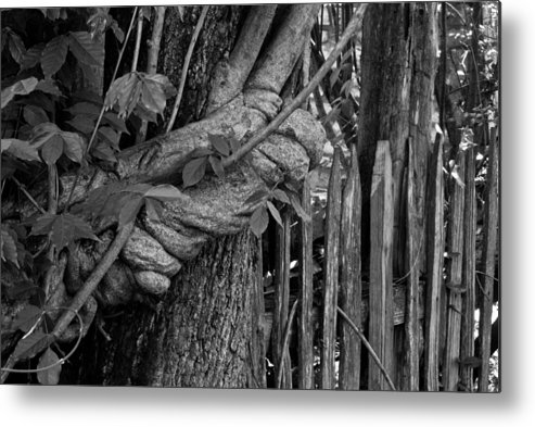 Fence Metal Print featuring the photograph Fence In The Tropics by Douglas Barnett