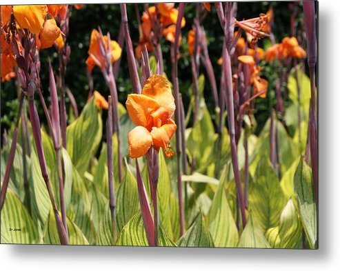 Floral Metal Print featuring the photograph Field For Iris by Shelley Jones