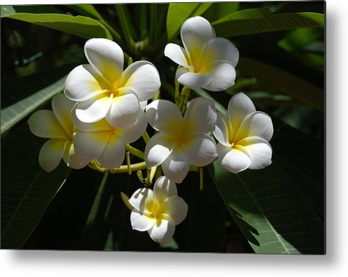 Nature Metal Print featuring the photograph Floral Beauties by Rob Hans