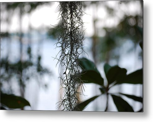 Nature Metal Print featuring the photograph Florida Moss by Peter McIntosh
