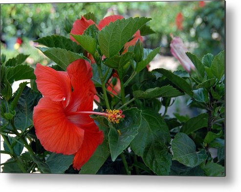 Flower Metal Print featuring the photograph Flowers 221 by Joyce StJames