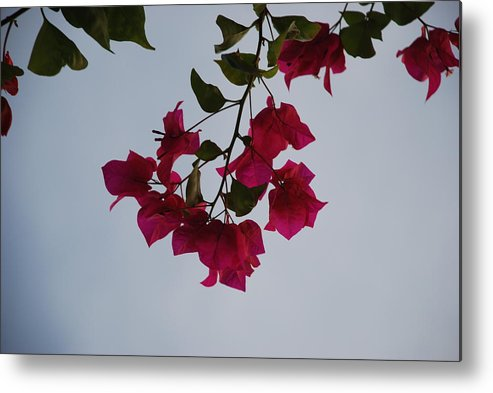 Flowers Metal Print featuring the photograph Flowers In The Sky by Rob Hans