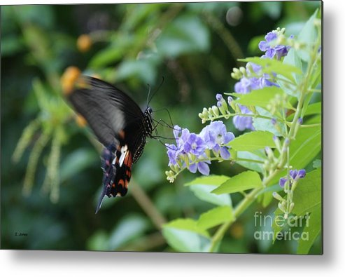 Butterfly Metal Print featuring the photograph Fly In Butterfly by Shelley Jones