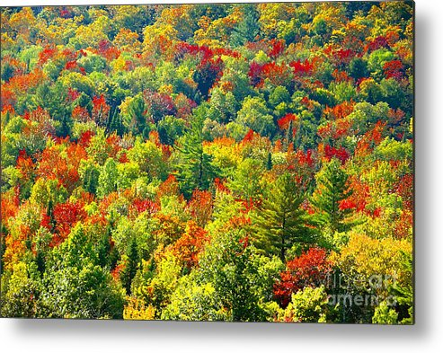 Forest Metal Print featuring the photograph Forest Of Color by David Lee Thompson