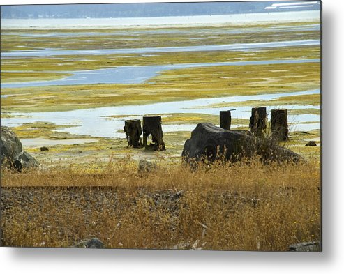 Swamp Metal Print featuring the photograph Forgotten Pier by Jessica Wakefield