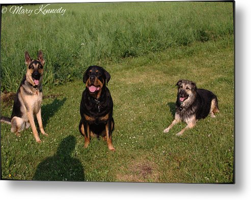 Dogs Metal Print featuring the photograph Friends by Mary Kennedy