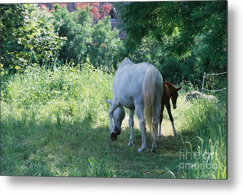 And Metal Print featuring the photograph Giverny Mare And Foal Landscape by Nadine Rippelmeyer