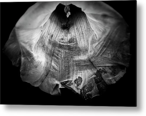 Black Metal Print featuring the photograph Glowing Flower by Grebo Gray