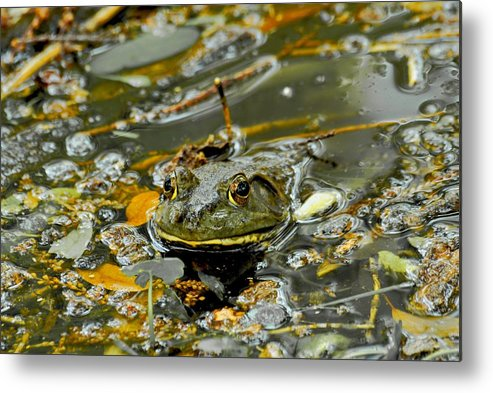 Frogs Metal Print featuring the photograph Good Morning by Donna Shahan