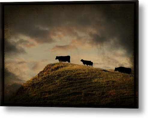 Cow Metal Print featuring the photograph Grass Is Greener On The Other Side by Shauna Fockler