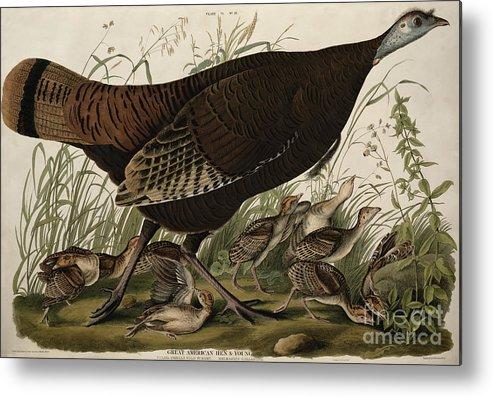 Great American Hen And Young Metal Print featuring the painting Great American Hen And Young by John James Audubon