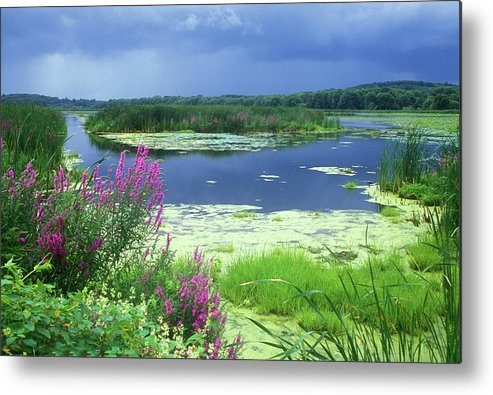 Great Meadows National Wildlife Refuge Metal Print featuring the photograph Great Meadows National Wildlife Refuge by John Burk