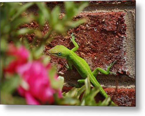 Anole Metal Print featuring the photograph Hangin' Out by Trudi Southerland
