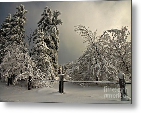 Snow Metal Print featuring the photograph Heavy Laden by Lois Bryan