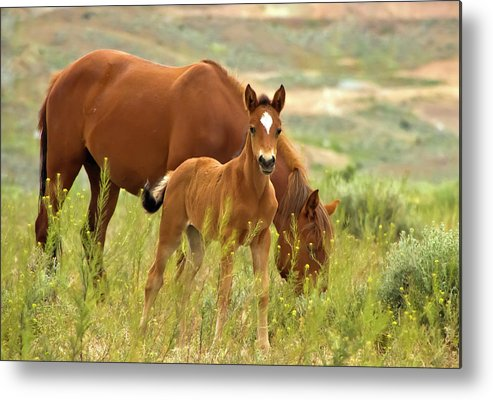 Horse Metal Print featuring the photograph Hello World by Waterdancer