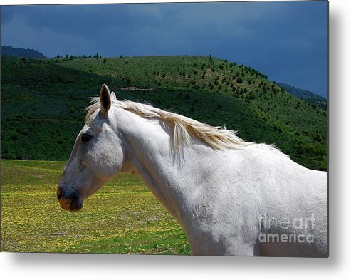 Horse Metal Print featuring the photograph Hero's Horse-colorful Background by Bruce Chevillat