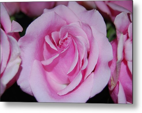 Flowers Metal Print featuring the photograph I Just Love Pink by Michael L Gentile