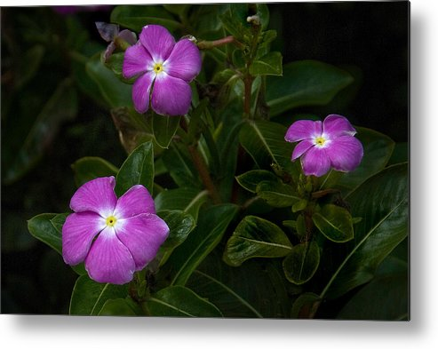 Flower Metal Print featuring the photograph In The Garden At Living Waters by Neil Doren