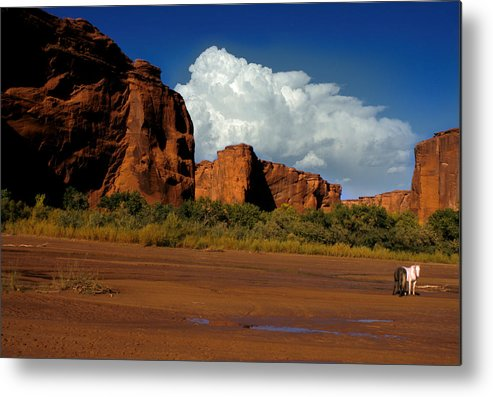 Horses Metal Print featuring the photograph Indian Ponies In The Canyon by Jerry McElroy