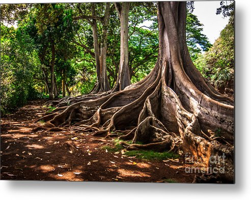 Hawaii Metal Print featuring the photograph Jurassic Park Tree Group by Blake Webster