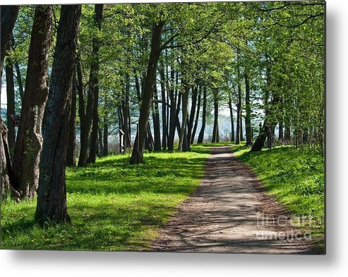 Trail Metal Print featuring the photograph Lake Trail by Piotr Loza