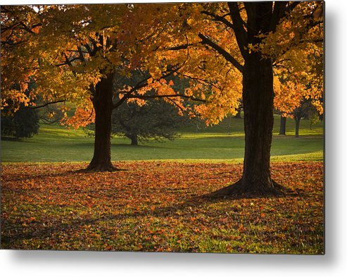 Seasons Metal Print featuring the photograph Loose Park Maple Trees by Chad Davis