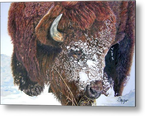 Animal Metal Print featuring the drawing Meager Fare by Susan Moyer