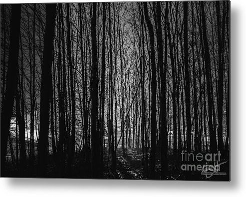 Landscape Metal Print featuring the photograph Mid-night by Darcy Hanson