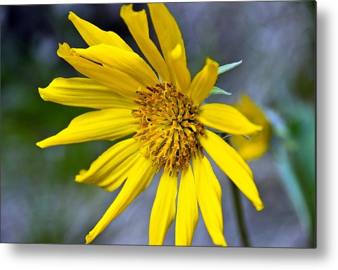 Metal Print featuring the photograph Mountain Flower by JK Photography