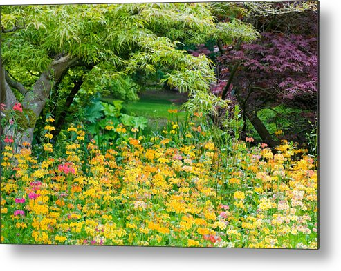 Flowers Metal Print featuring the photograph My Monet by Peter Olsen