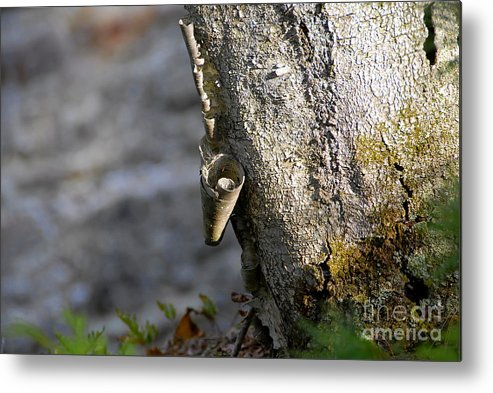 Wood Metal Print featuring the photograph Nature's Detail by David Lee Thompson