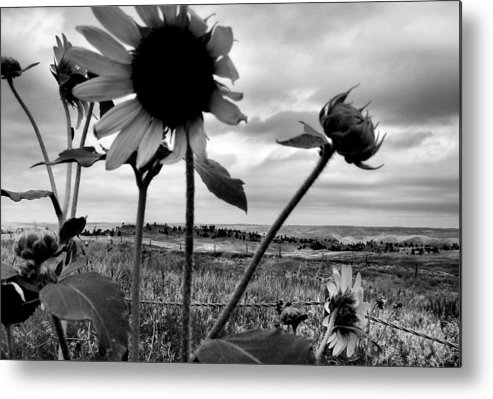 Black And White Metal Print featuring the photograph Nebraska Sky by Tingy Wende