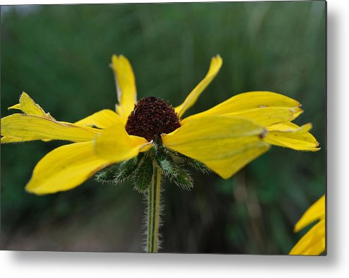 Yellow Metal Print featuring the photograph Open To The Sky by Amanda Vouglas