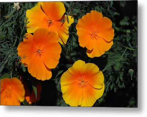 Flowers Metal Print featuring the photograph Orange And Yellow Flowers by Carol Eliassen