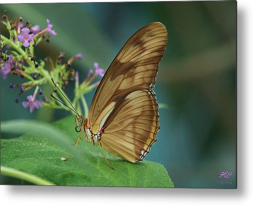 Butterfly Metal Print featuring the photograph Orange Julia by Kenneth Hadlock