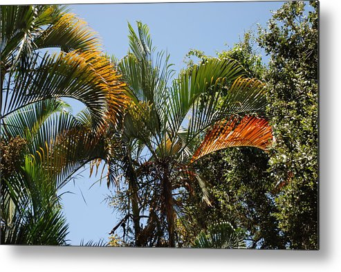 Palms Metal Print featuring the photograph Orange Trees by Rob Hans