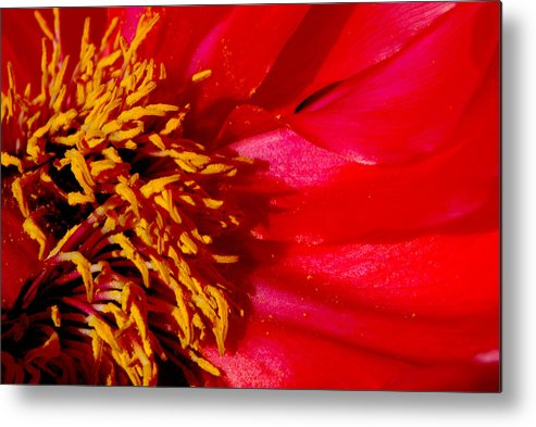 Floral Metal Print featuring the photograph Paeonia 1 by Lyn Perry