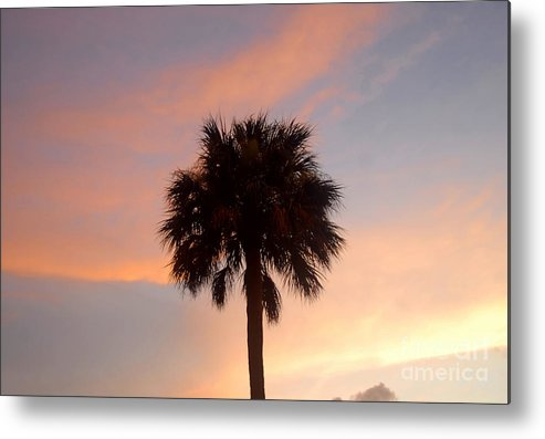Palm Tree Metal Print featuring the photograph Palm Sky by David Lee Thompson
