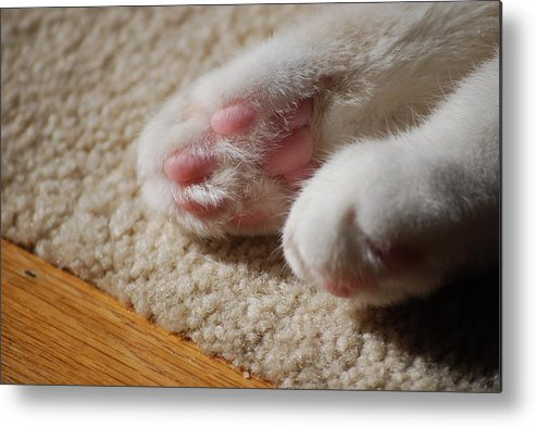 Cat Metal Print featuring the photograph Paws by Peter McIntosh