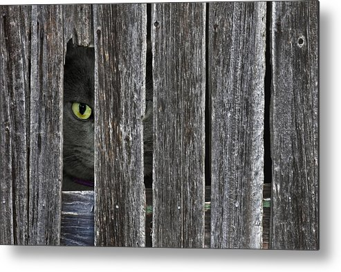 Barn Metal Print featuring the photograph Peeping Tom by Maria Dryfhout