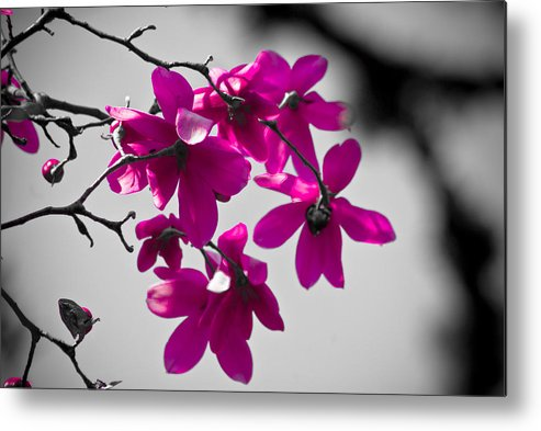 Portland Metal Print featuring the photograph Pink Flowers by Craig Perry-Ollila