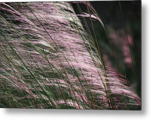 Outdoors Metal Print featuring the photograph Pink In The Wind  by Michael L Gentile