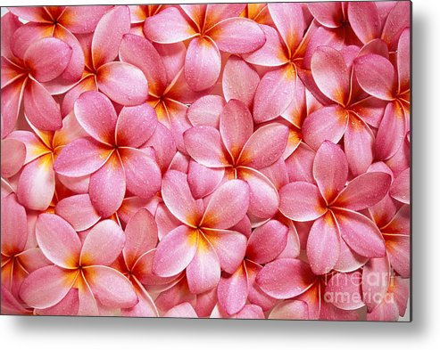 Aloha Metal Print featuring the photograph Pink Plumeria by Kyle Rothenborg - Printscapes