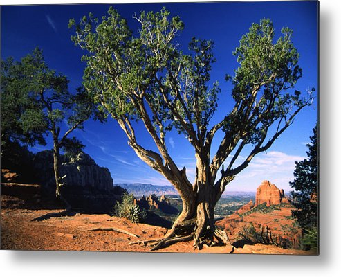 Arizona Metal Print featuring the photograph Primary Colors by Randy Oberg