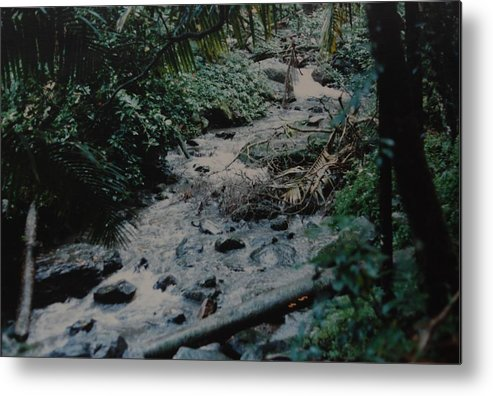 Trees Metal Print featuring the photograph Puerto Rico Water by Rob Hans