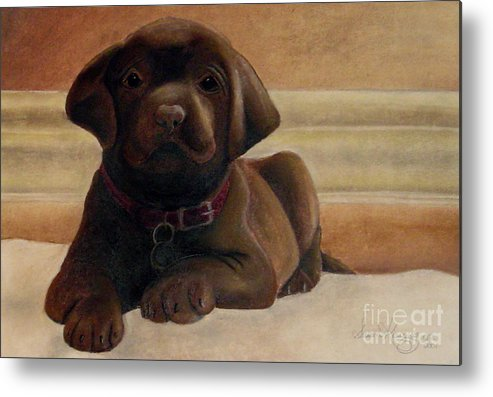 Puppy Metal Print featuring the drawing Puppy Love by Susan Clausen
