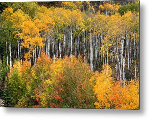 Colorado Fall Metal Print featuring the photograph Quiet Beauty by Tim Reaves